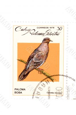 postage stamp bird close up