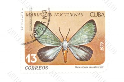 postage stamp butterfly close up