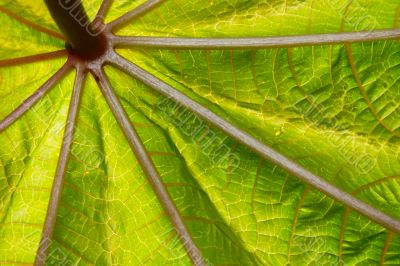 close-up abstract leave structure