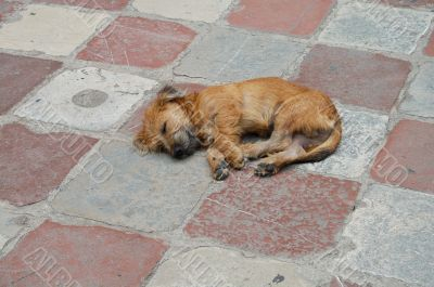 dog on the tile