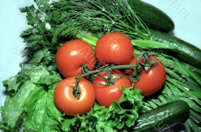 Red tomatoes with greenery and cucumbers