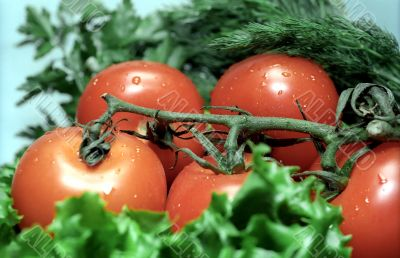 Tomatoes with greenery