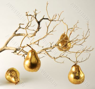 Dry Branch with Golden Pears