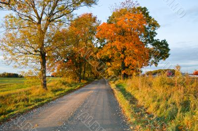 Dirt Road in Fall