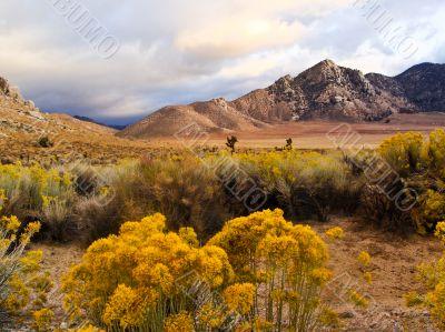 Desert Scene in Fall
