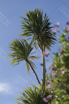 Palm trees set against a lovely blue sky
