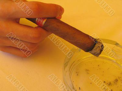 a cuban cigar close-up