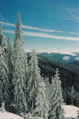 Winter Carpathians