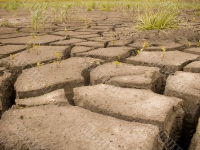 cracks from a drought