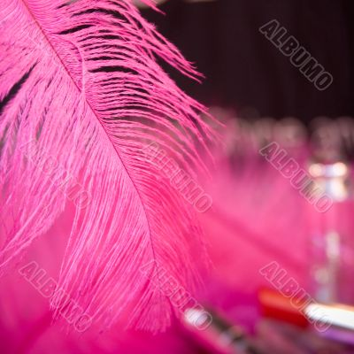 Pink Feather Glamour