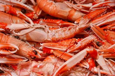 Lobsters, shellfish, crawfish