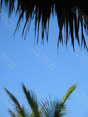 palm tree leaves and blue sky