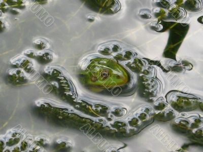 Jacuzzi for a frog