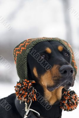 trendy dog
