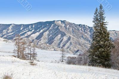 Peak of mountain and fur-tree.