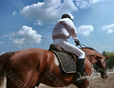 equestrian sportsman riding brown horse