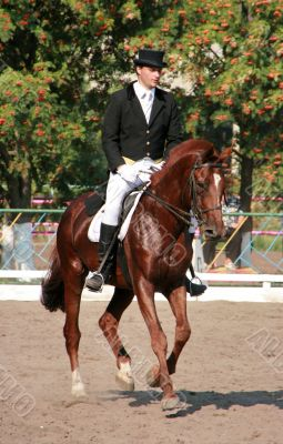 equestrian sportsman on brown horse