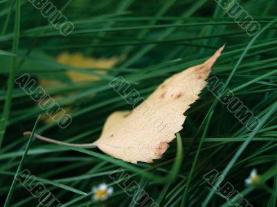sheet in herb