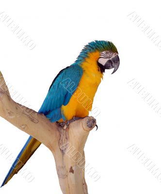 The parrot on a branch