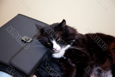 Black cat rest over suitcase