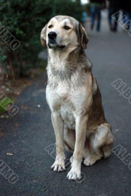 a big stray dog