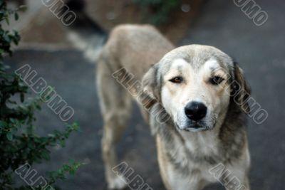 innocent stray dog looking at camera