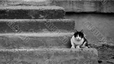 tomcat on the step