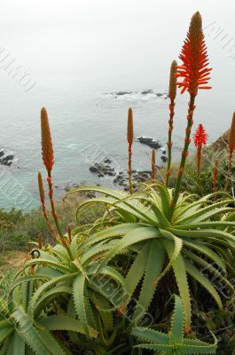 Flowers on a Cliff