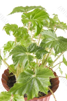 indoor plant on white