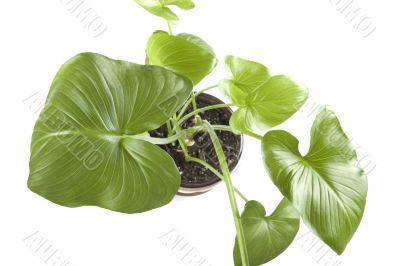 indoor plants closeup