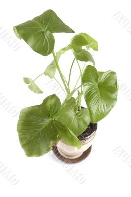 indoor plants on white