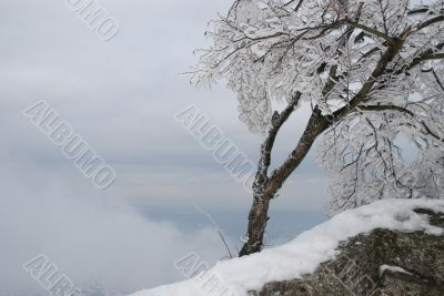 Frost coverd tree on a slope of a mountain