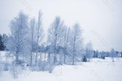 winter landscape / horizontal