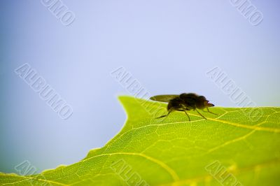Fly on leave