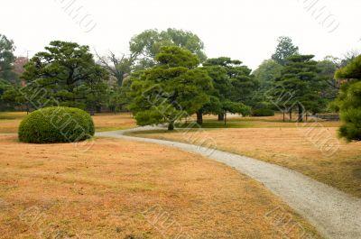 Lawn and bush