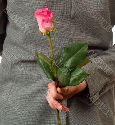Surprise Rose