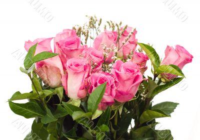 Isolated Fresh Roses