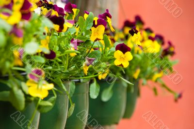 Row of flowerpots