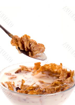 cornflakes with milk in a bowl