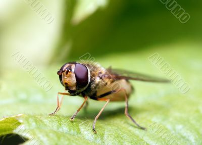 Fly on sheet