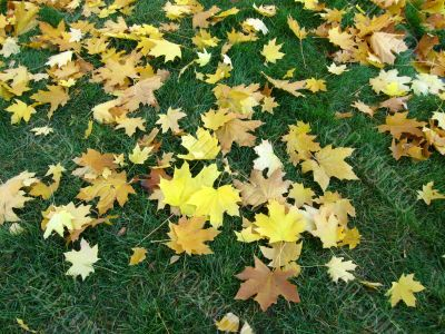 autumn  foliage on  grass