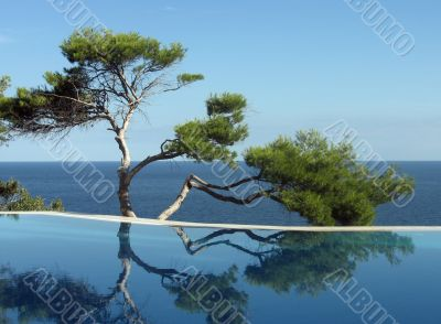 Pine-tree, pool and sea