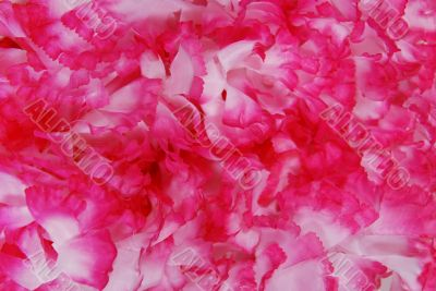 Pink and white fabric pedals texture