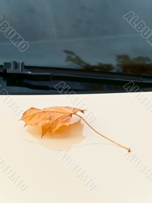 maple leaf at bonnet