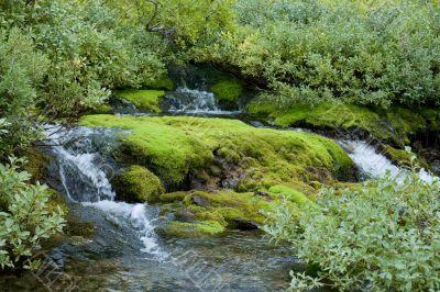 Beautiful northern damp wood in light green tones