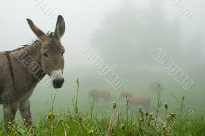 Donkey and the Mist
