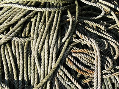 ropes in the sunshine