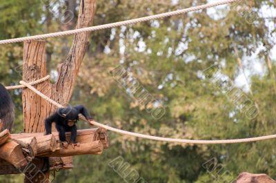 Little Monkey Courage