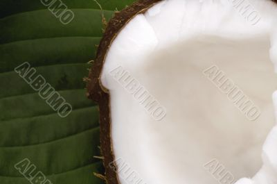 open coconut and green leaf. exotic