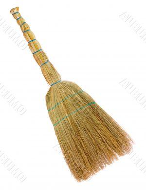 Yellow broom